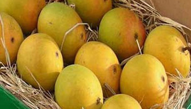 Less mango export from Pak this year - Agencies - The Sunday Indian