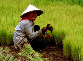 China launches website for farmers